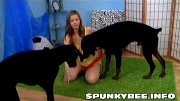 spunky bee plays with dogs
